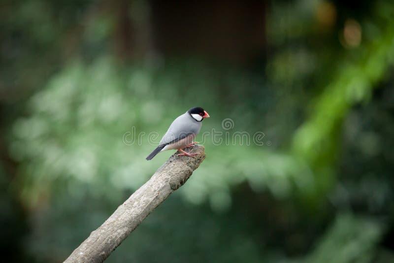 Piccolo uccello esotico sul ramo fotografie stock