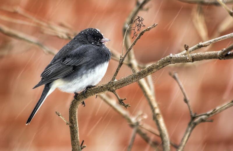 Piccolo uccello in precipitazioni nevose immagini stock