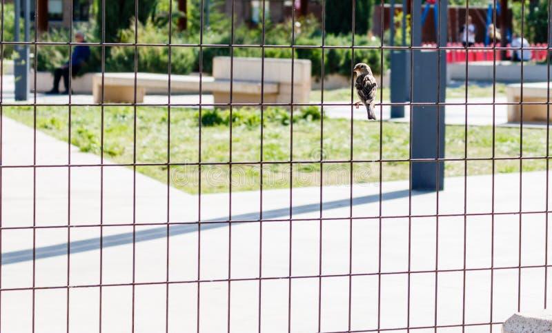 Piccolo uccello su un recinto fotografia stock libera da diritti