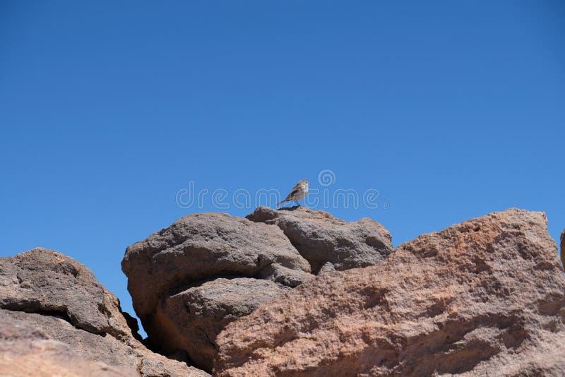 Piccolo uccello sul cielo della radura della roccia sul picco di montagna immagine stock libera da diritti