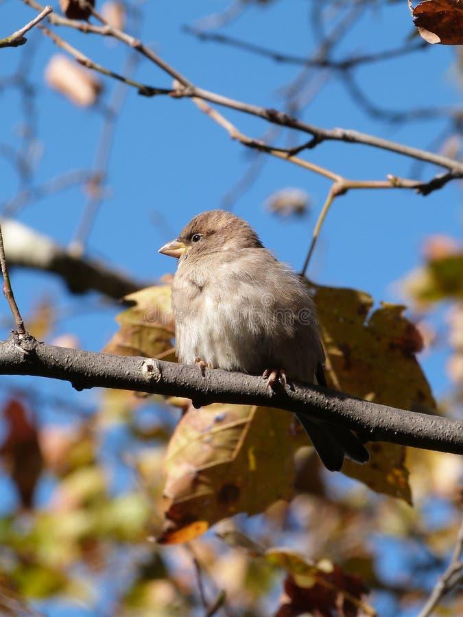Piccolo uccello sull'albero immagini stock libere da diritti
