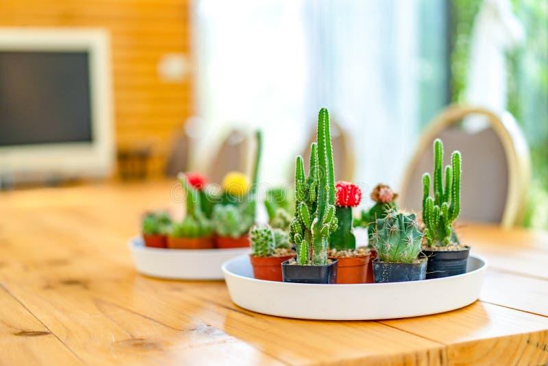 Piccolo vario cactus nel piatto bianco del cerchio cui metta sulla tavola di legno per decora la sala riunioni nel giardino fotografie stock