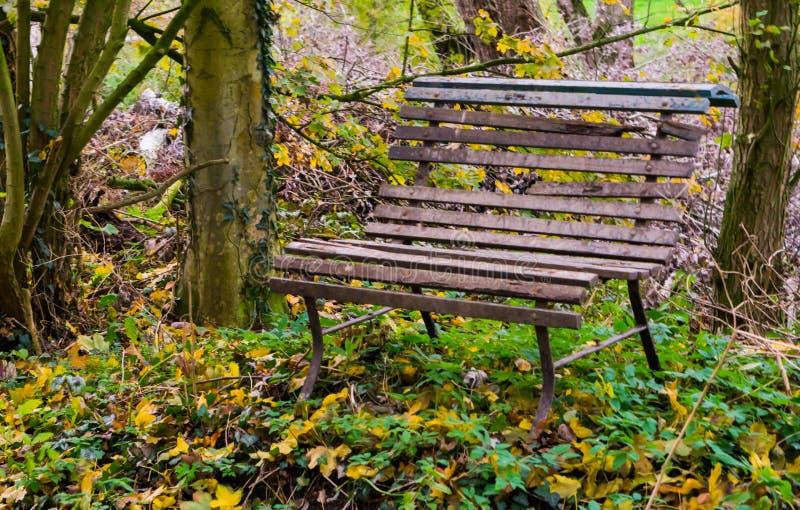 Piccolo vecchio banco di legno stagionato vuoto nella foresta nella stagione di autunno fotografia stock libera da diritti