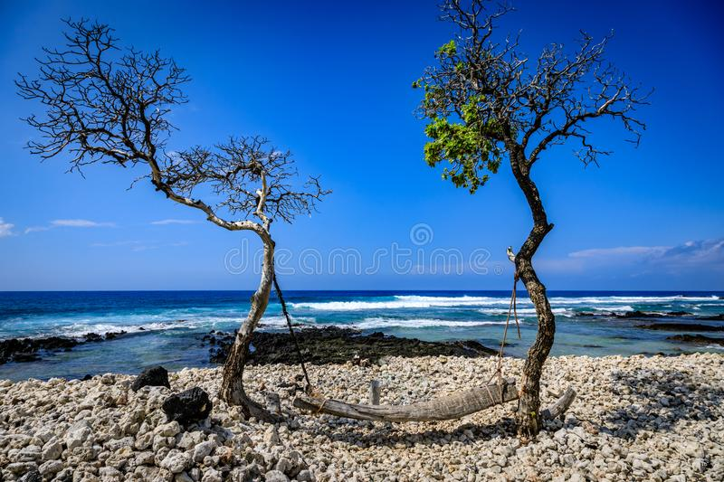 A pice of driftwood is used as a swing looking out over the ocean on a clear day in Hawaii royalty free stock image
