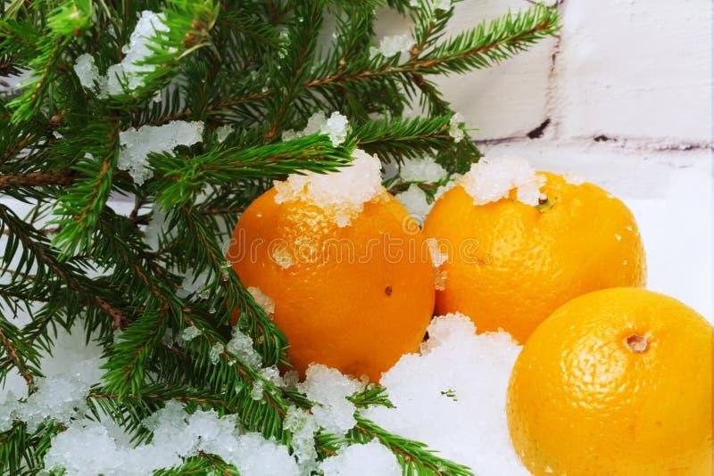 Picea de la nieve de las mandarinas foto de archivo libre de regalías