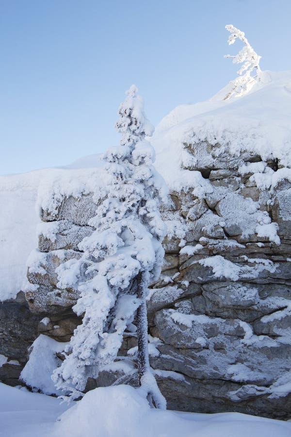 Piceas y rocas nevadas Montaña Zyuratkul, tierras del invierno fotografía de archivo