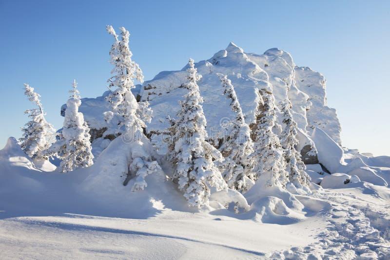 Piceas y rocas nevadas Montaña Zyuratkul, tierras del invierno imágenes de archivo libres de regalías