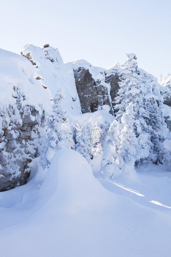 Piceas y rocas nevadas Montaña Zyuratkul, tierras del invierno fotos de archivo
