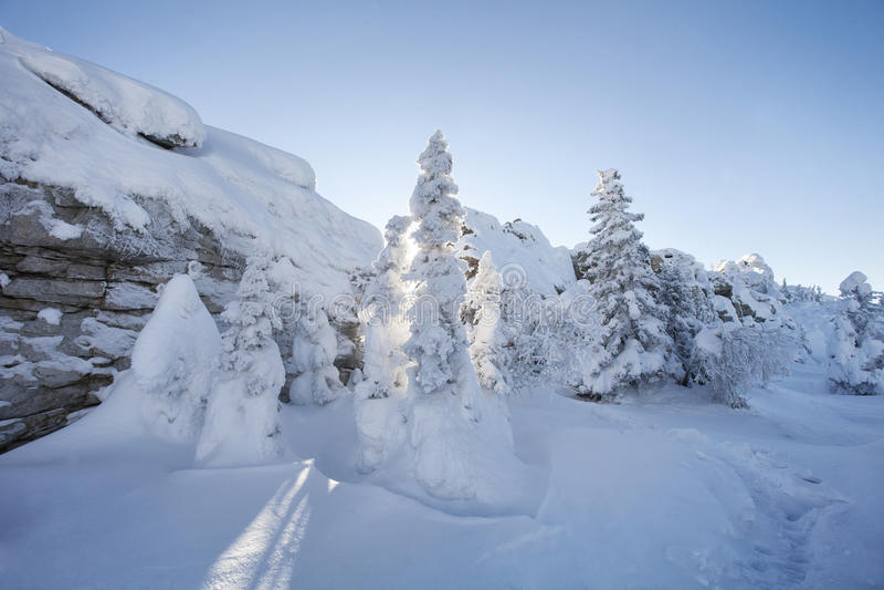 Piceas y rocas nevadas Montaña Zyuratkul, tierras del invierno imagen de archivo