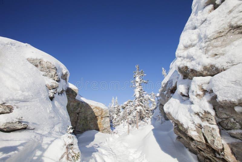 Piceas y rocas nevadas Montaña Zyuratkul, tierras del invierno fotografía de archivo libre de regalías