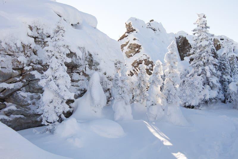 Piceas y rocas nevadas Montaña Zyuratkul, tierras del invierno foto de archivo libre de regalías