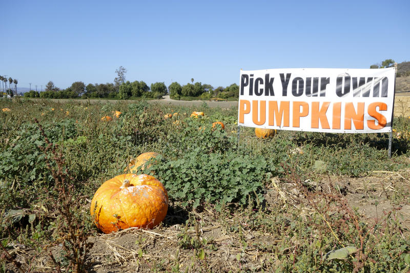 Download Pick Your Own Pumpkins Royalty Free Stock Photography - Image: 37530417
