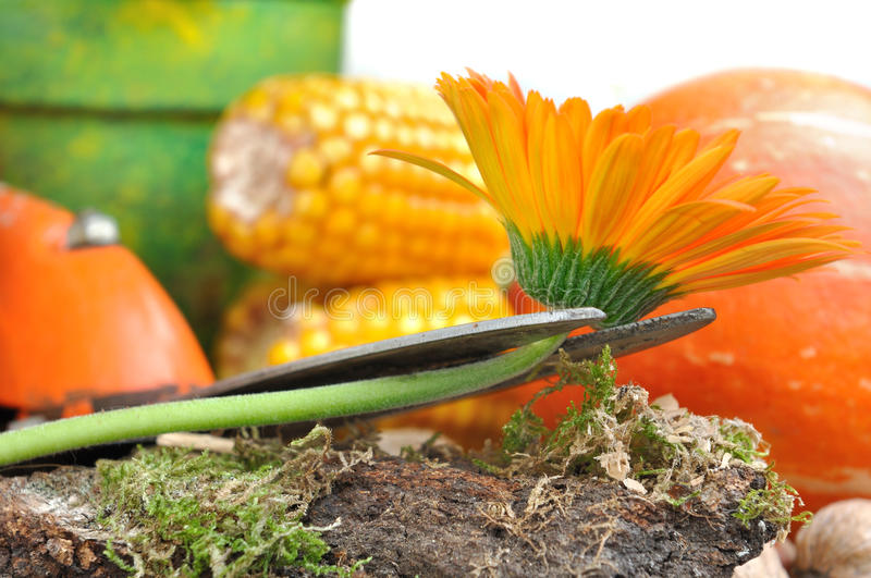 Download Picked flower stock photo. Image of colorful, vegetables - 33575908