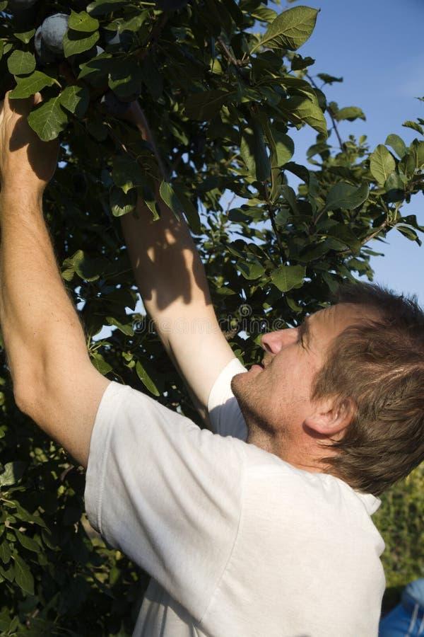 Picker durch die Arbeit im Garten stockfotos