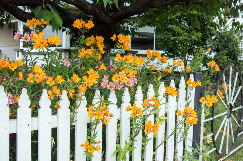 Picket fence. White picket fence with pretty flowers stock photo