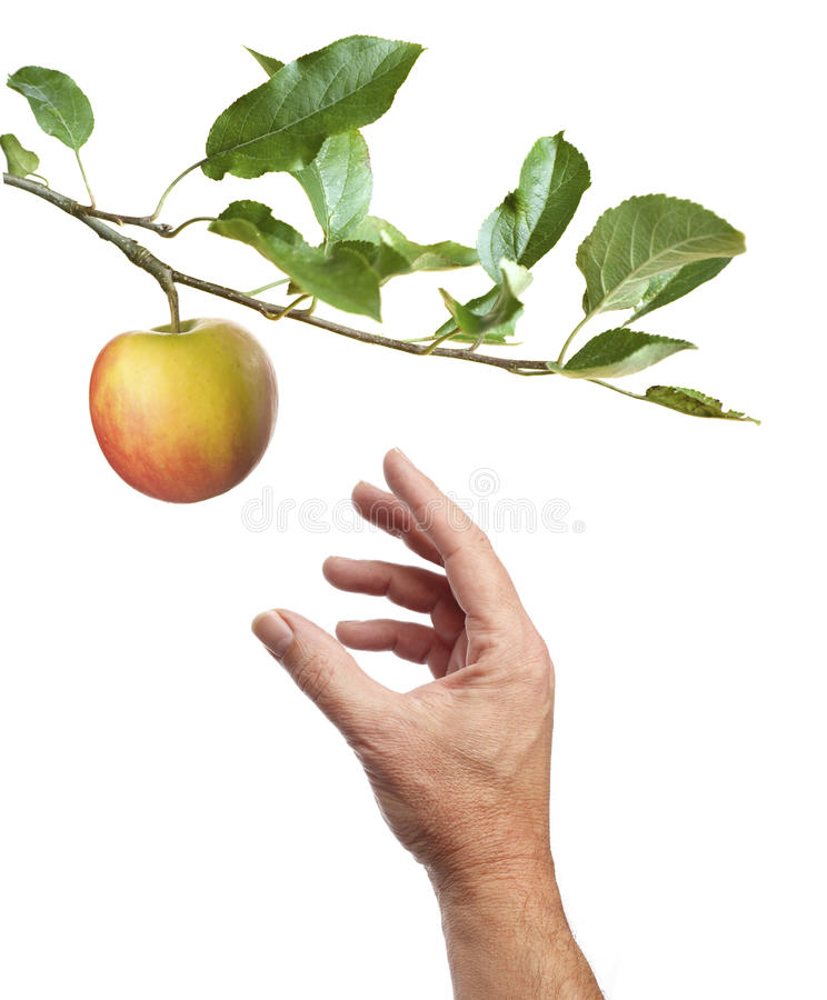 Picking an apple. White background stock image
