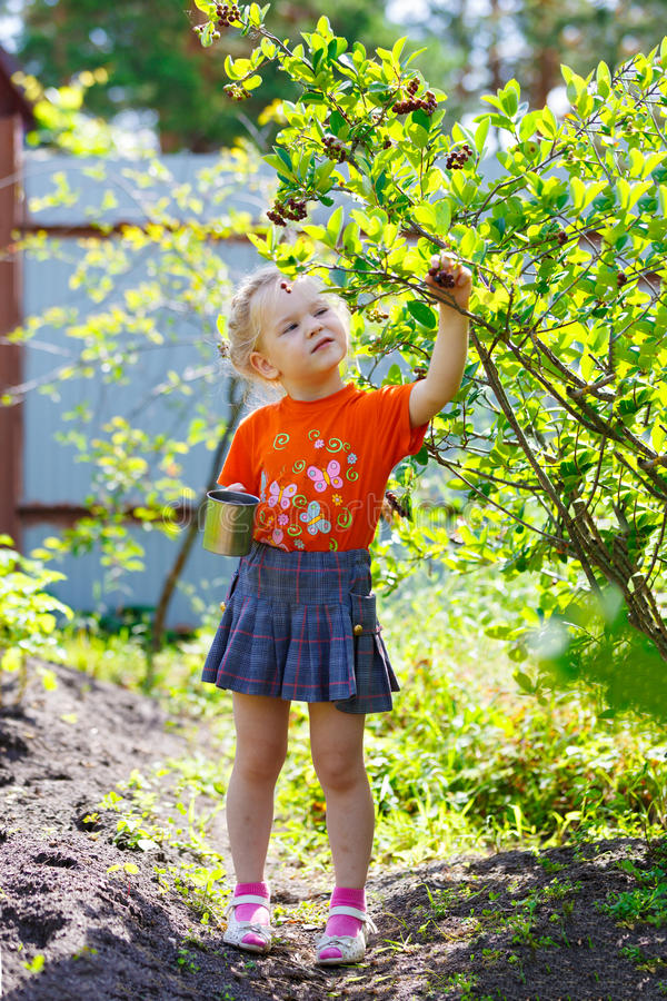 Download Picking Of  Berry Royalty Free Stock Images - Image: 25966919