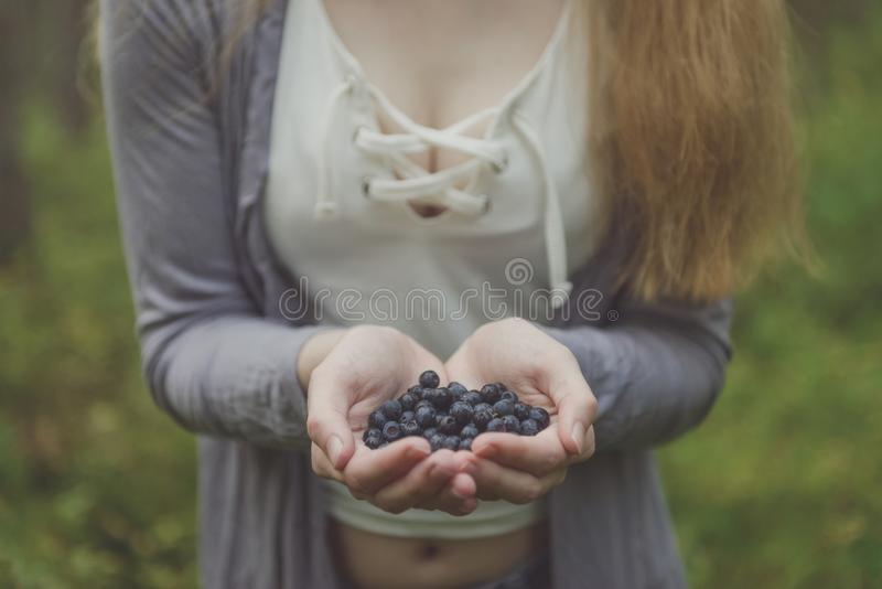 Blueberries in woman hands in forest. Fresh blueberries in hands. Hands full of blueberries. Woman tits in forest. push up stock photography