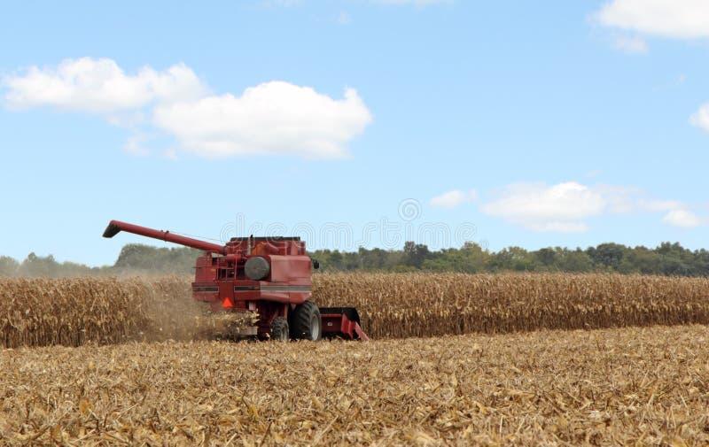 Picking Corn stock image