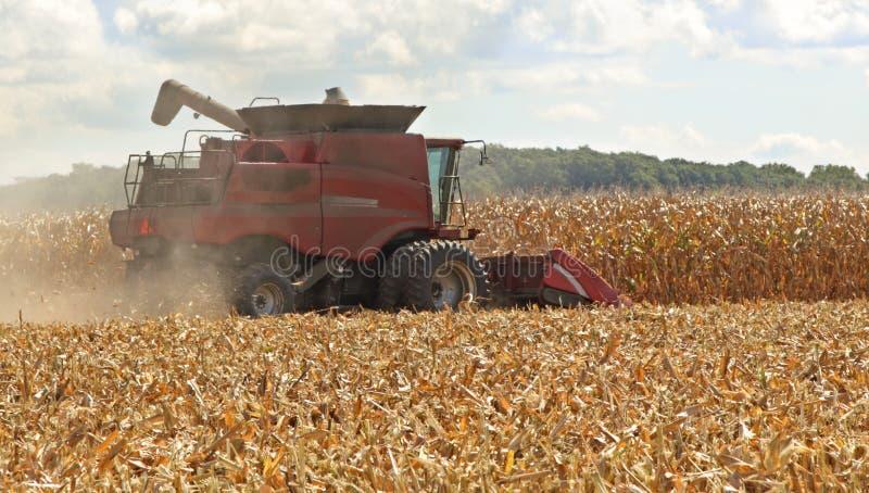 Picking Corn stock photo