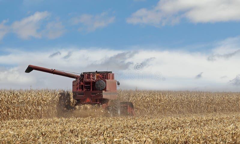 Picking Corn Crop stock photos