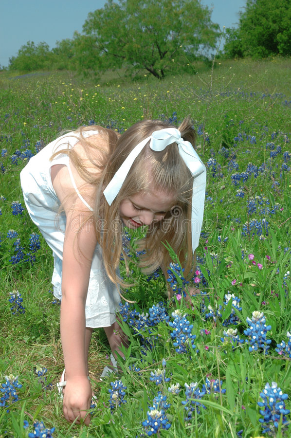 Picking Flowers. Small child picking flowers. Blue Bonnets are native Texas flowers. The Blue Bonnet is the State Flower of Texas, USA royalty free stock photos