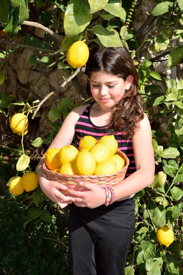 Picking lemons. Young girl smiling with dimple while she holds a basket full of lemons under the lemon tree royalty free stock photo