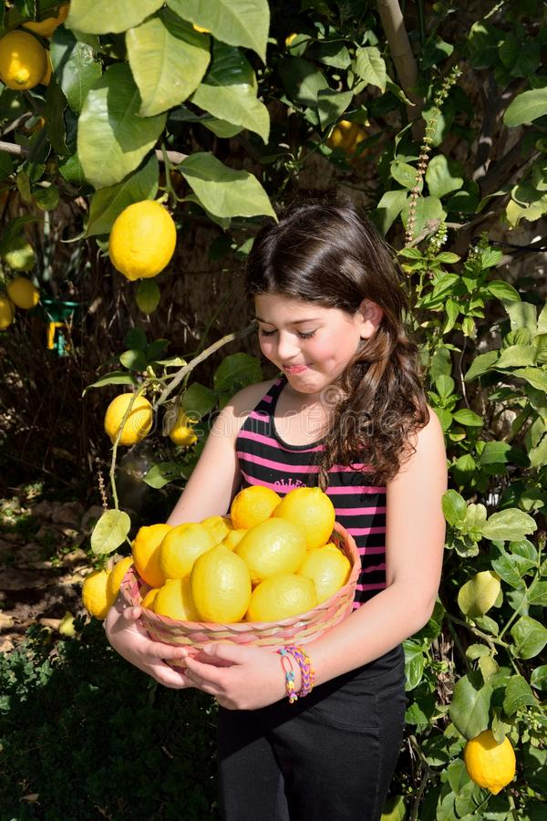 Picking lemons. Young girl smiling with dimple while she holds a basket full of lemons under the lemon tree royalty free stock photography