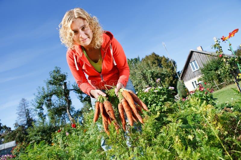 Picking Organic Carrots Royalty Free Stock Photos
