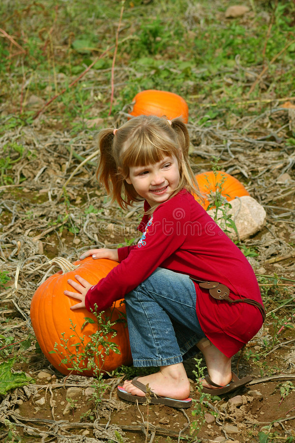 Picking a Pumpkin stock photos