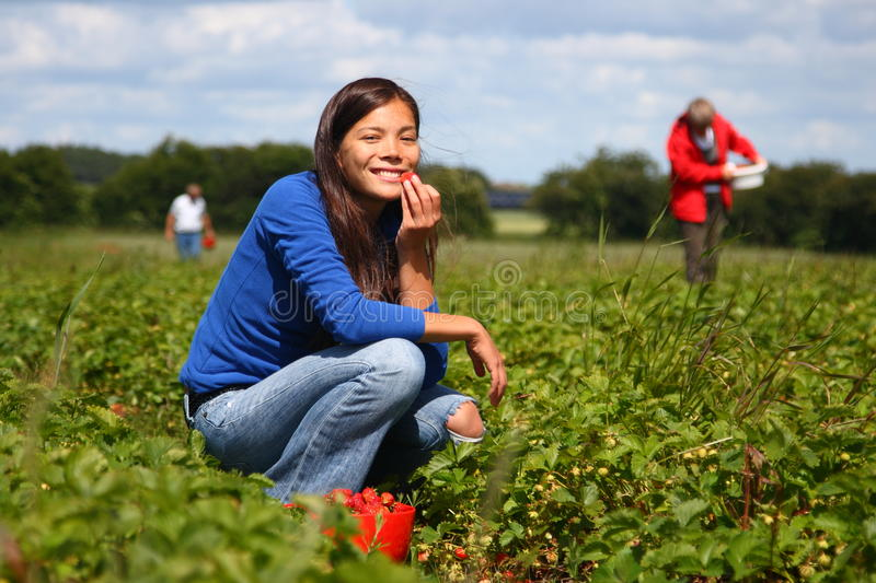 Download Picking strawberries stock image. Image of delicious, food - 9869241