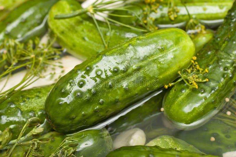 Pickle all'aneto fresco casalingo fotografia stock