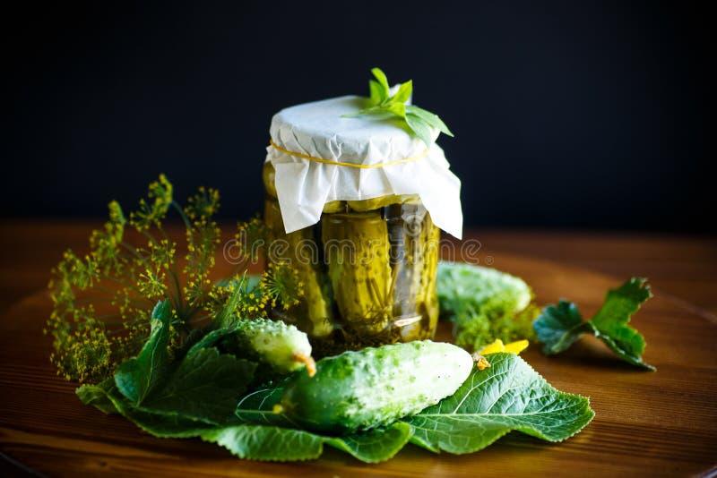 Pickled conservou pepinos fotografia de stock