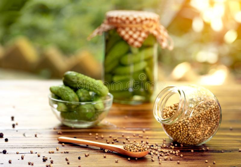 Pickles cucumbers in a glass jar with coriander royalty free stock photography