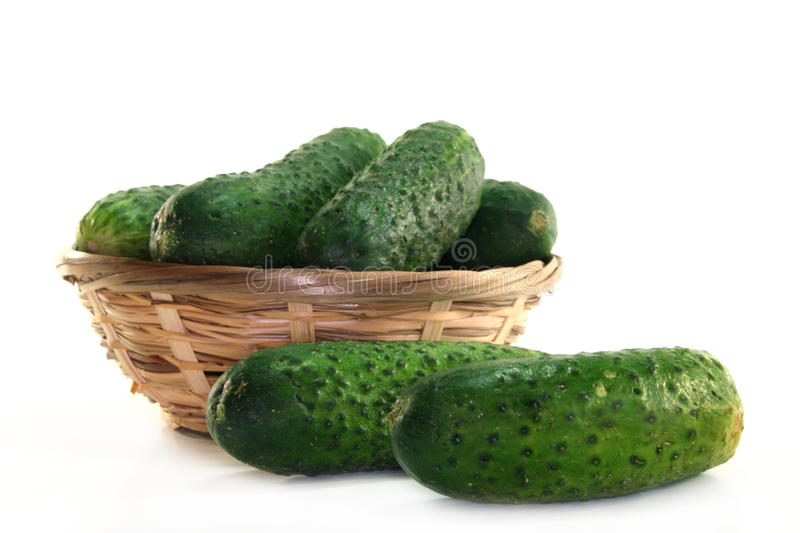 Pickling cucumbers. Pickling cucumber in a small basket on a white background stock photos