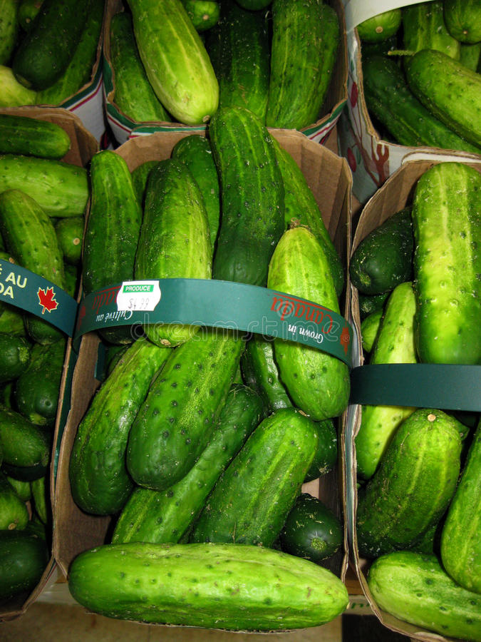 how to keep cucumbers fresh for pickling