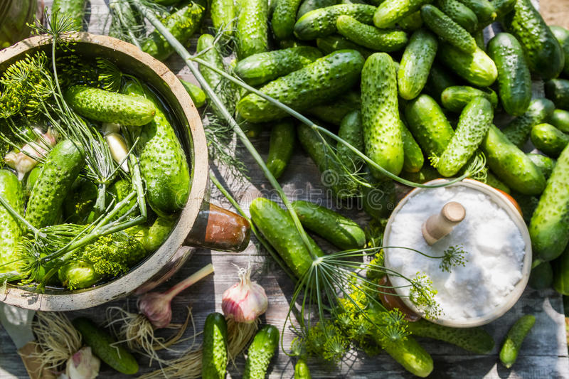 Pickling cucumbers in a clay pot stock photography