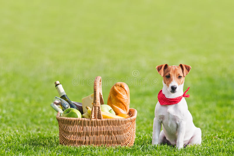 Picknick royalty-vrije stock foto