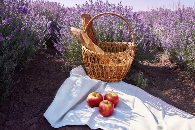 Picknick i lavendelfälten med den franska bagetten royaltyfri bild