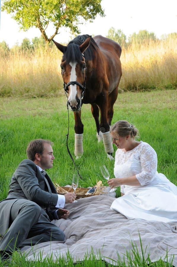 Picknick med hästen arkivfoto