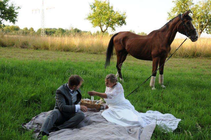 Picknick met paard stock fotografie