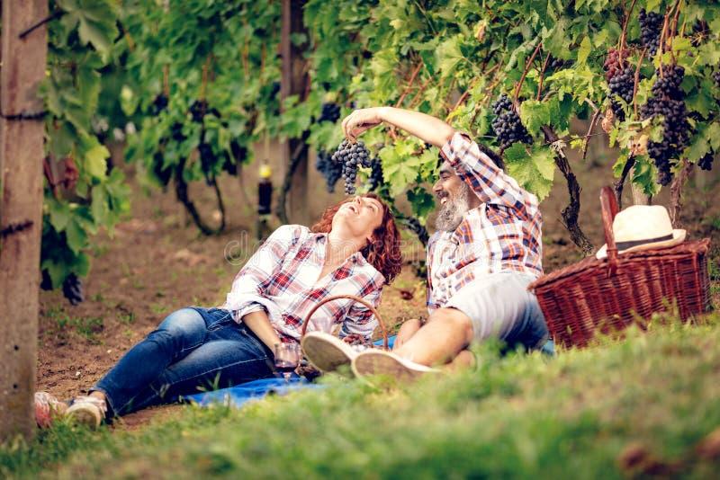 Picknick på vingården arkivfoton