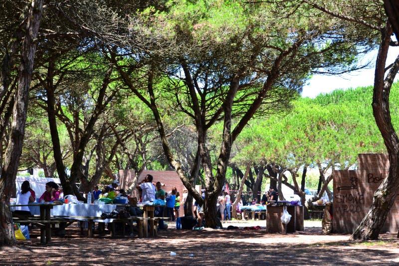 Picknick-Park mit Bäumen und Grill stockbild