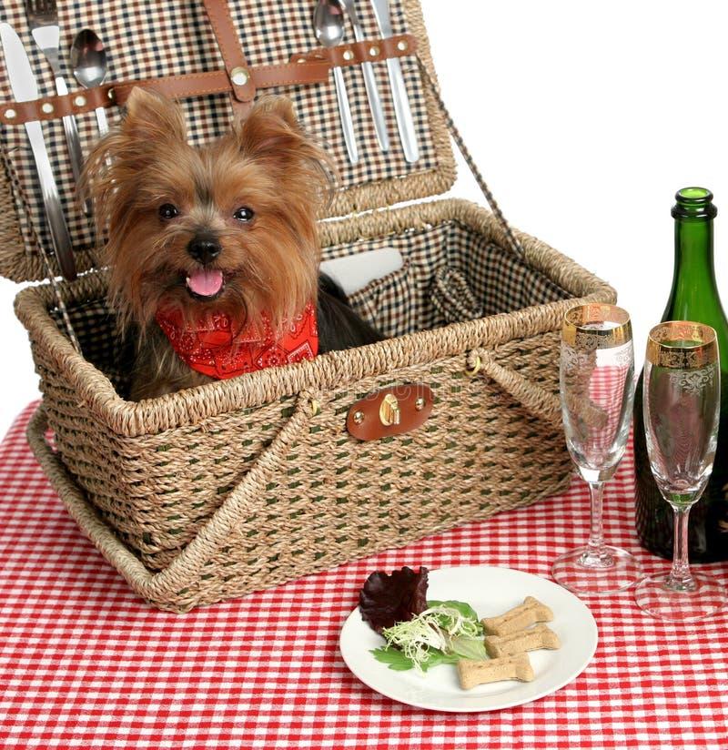 Picknick-Welpen stockfotos