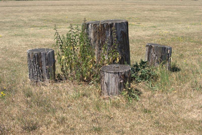 Picknicklijst en stoelen van secties logboeken wordt gemaakt dat stock afbeeldingen