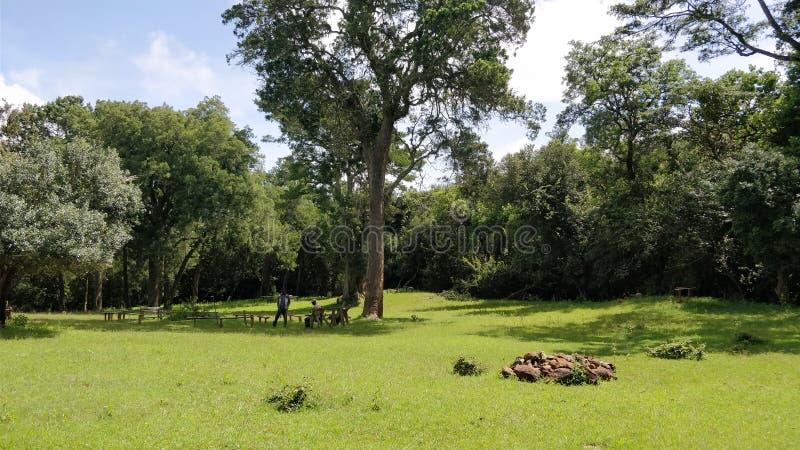 Picknickplatser i Kenya fotografering för bildbyråer