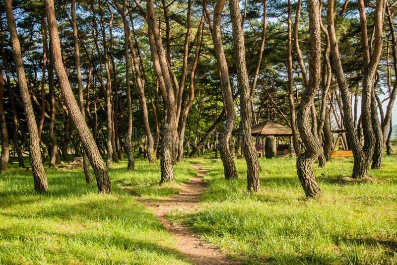 Picknickplatz in einer Waldung von immergrünen Bäumen lizenzfreies stockfoto