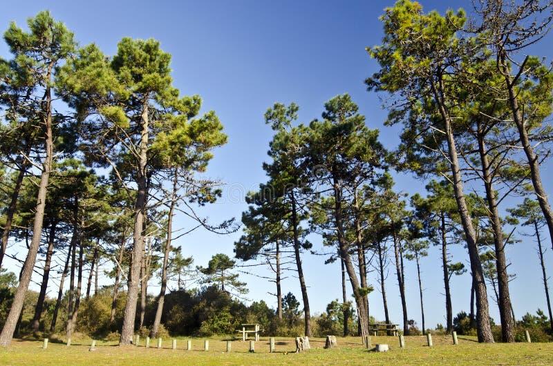 Picknickplatz im Marinekiefernwald in Yeu-Insel stockbilder