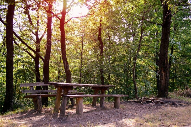 Picknickställe i skog royaltyfria foton