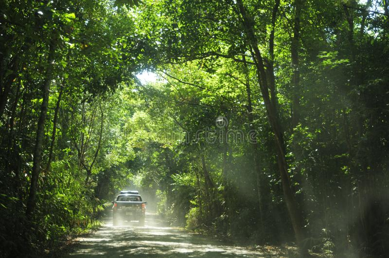Pickup truck running pass rural road of tropical green forest. Horizontal color image royalty free stock image